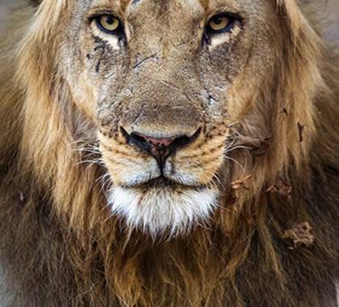 Luangwa Safari