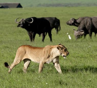 Kenya Supreme Safari