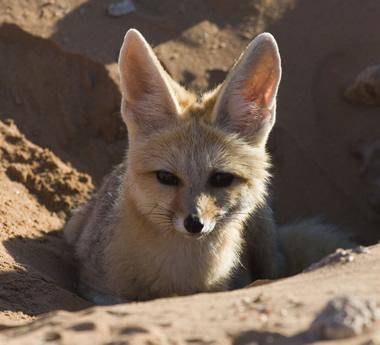 Namibia Desert Explorer