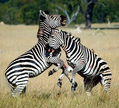 Ultimate Zimbabwe