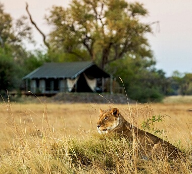 Authentic Botswana