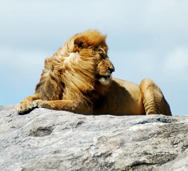 Serengeti & Crater Safari