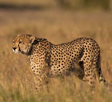 Kenya Explorer