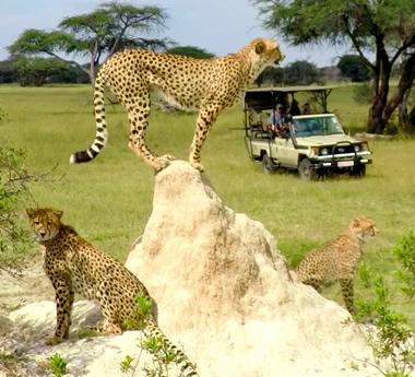 Zimbabwe Adventure