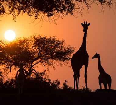 15-Day Namibia Fly/Drive Safari