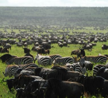 Great Migration & Gorilla Safari