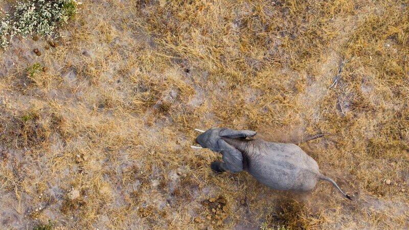 Wildlife Sightings from Balloon