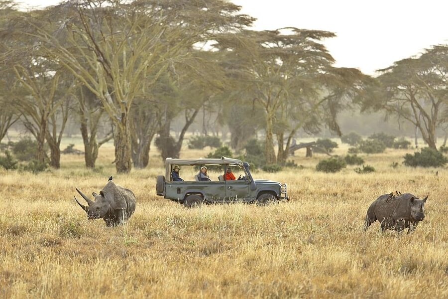 Afternoon Game Drive with Rhinos