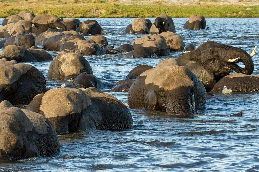 Why book an African safari?