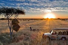 Why book an African Safari (Especially Now)?