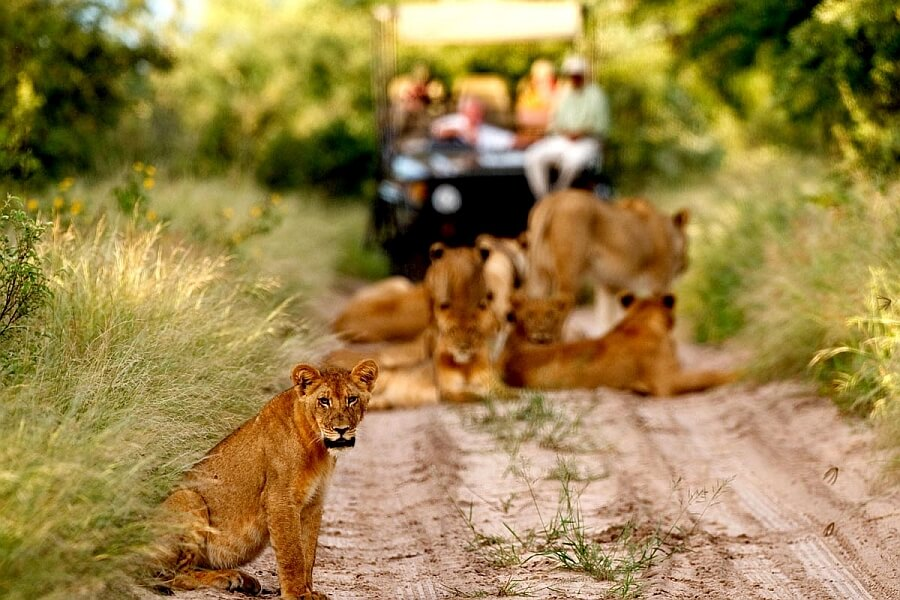 Botswana Travel with Toddlers and Babies