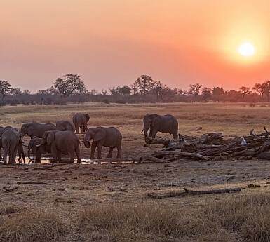 Botswana & Vic Falls Family Safari with Wilderness Safaris (7+)
