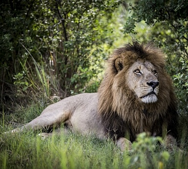 Botswana Family Deluxe with Wilderness Safaris (6+)