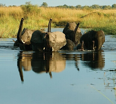 Vic Falls & Chobe Safari with Kids (1+)