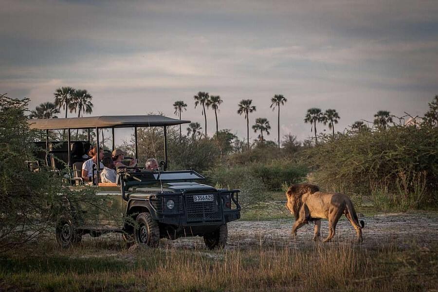 Okavango Delta with Kids