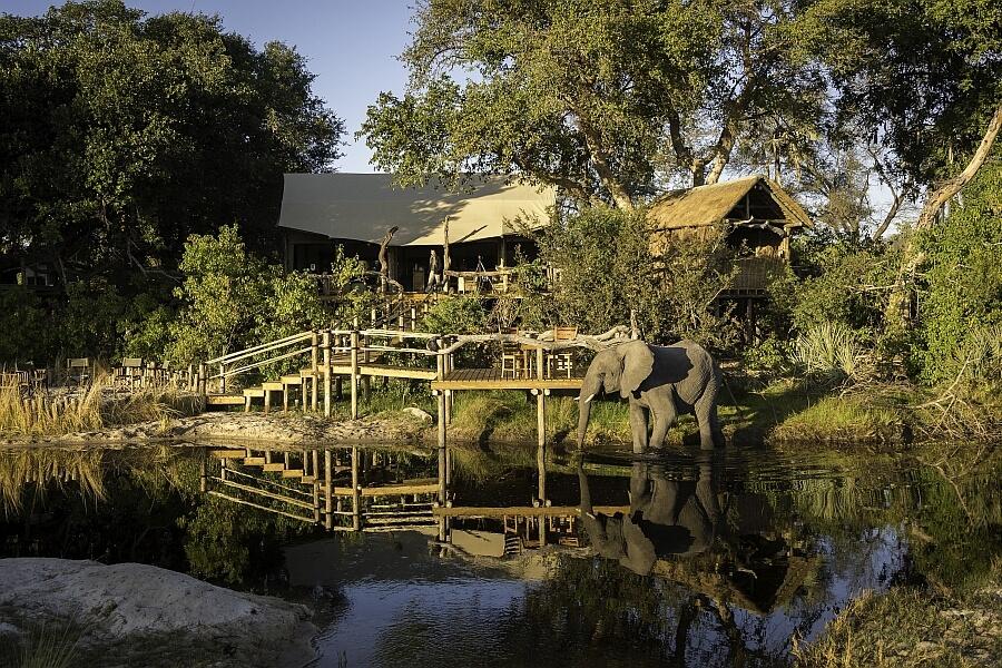 Elephant at Tubu Tree Lodge