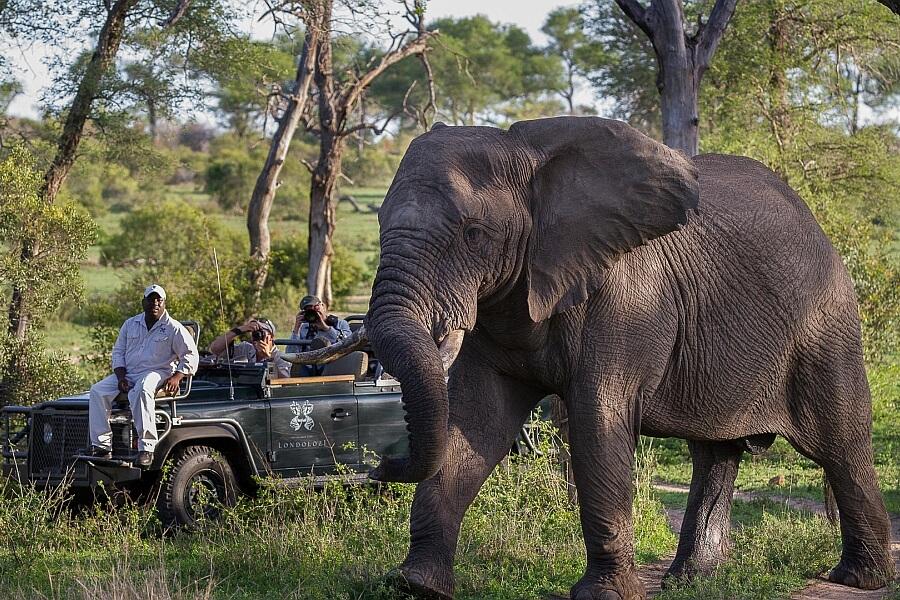 Elephant in Front of Waterhole in Madikwe
