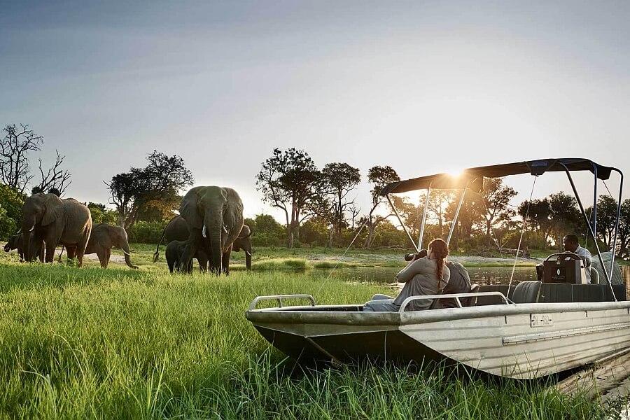 Experience Elephants in Chobe