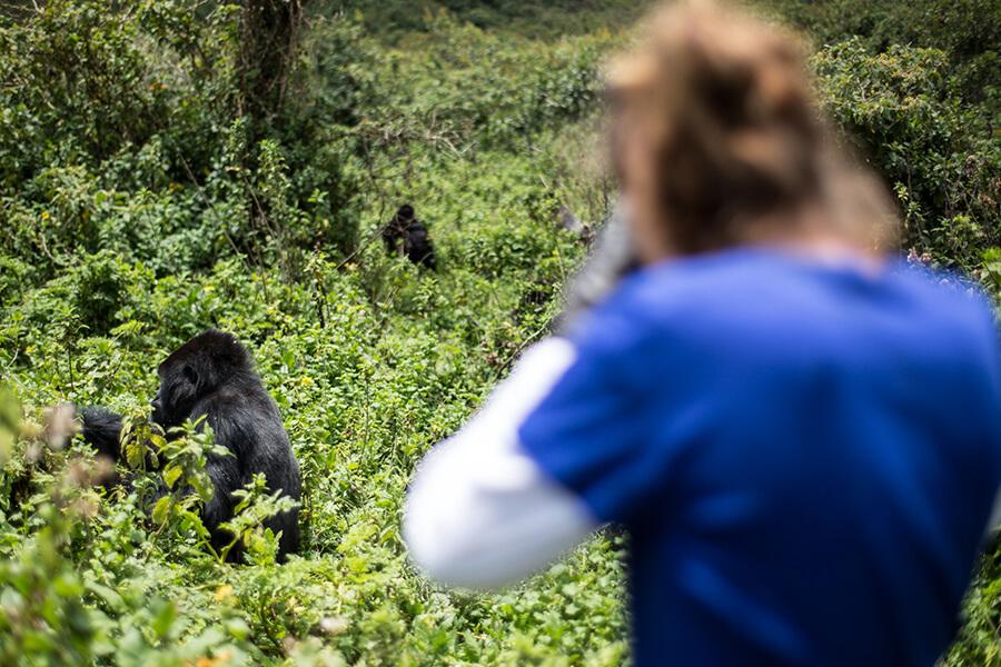 Bucket List Gorilla Trekking in East Africa