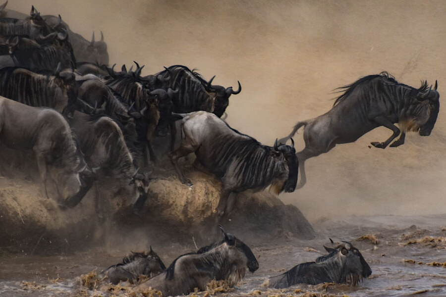 Great Migration in East Africa