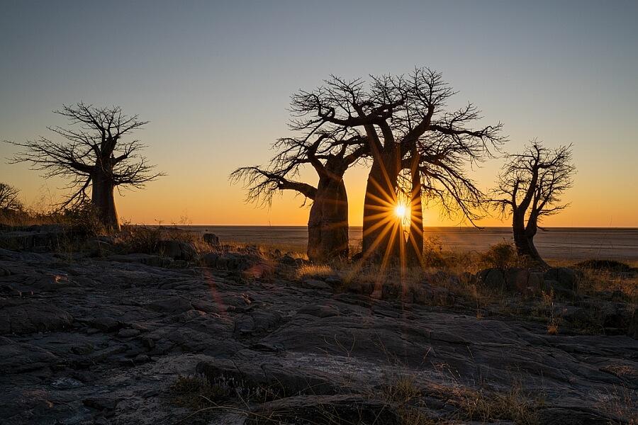 Sun rays and Baobabs